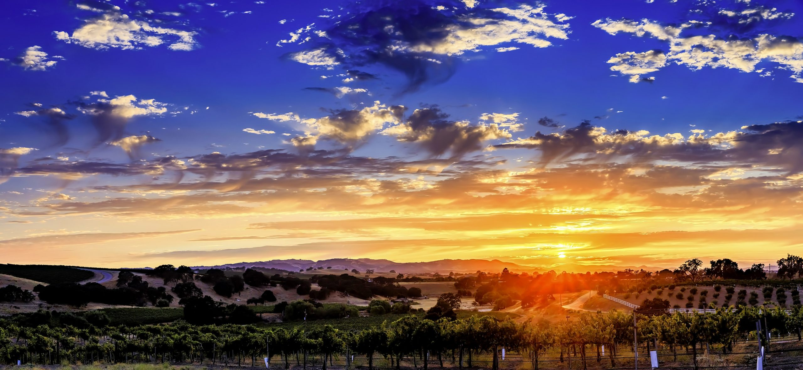 Sunset over vineyards in Paso Robles
